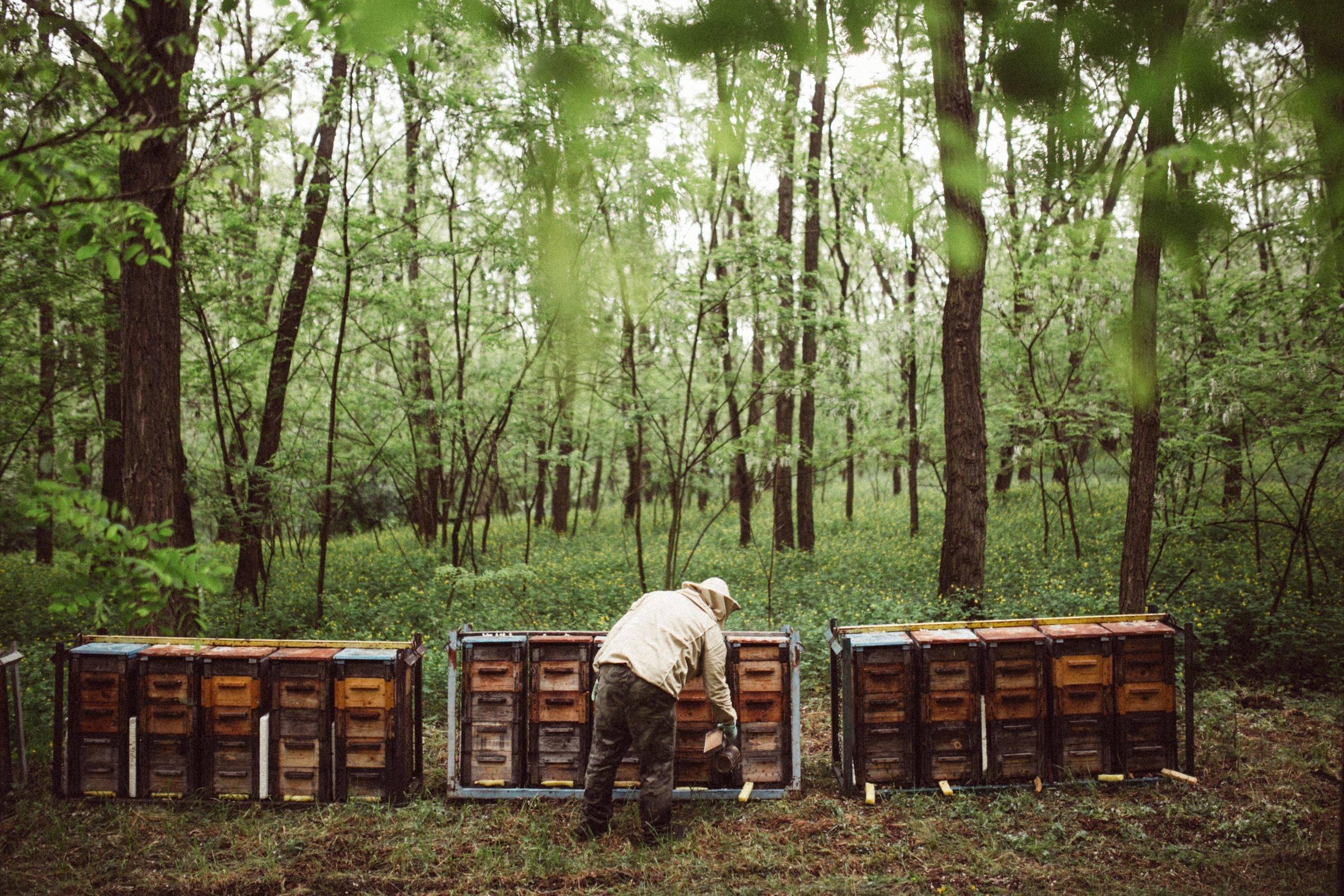 Black Locust Lumber forest