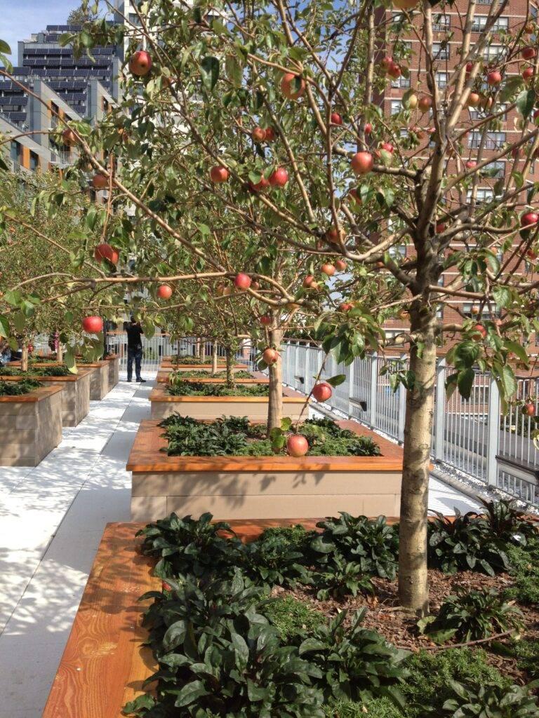 green rooftop recreational ideas